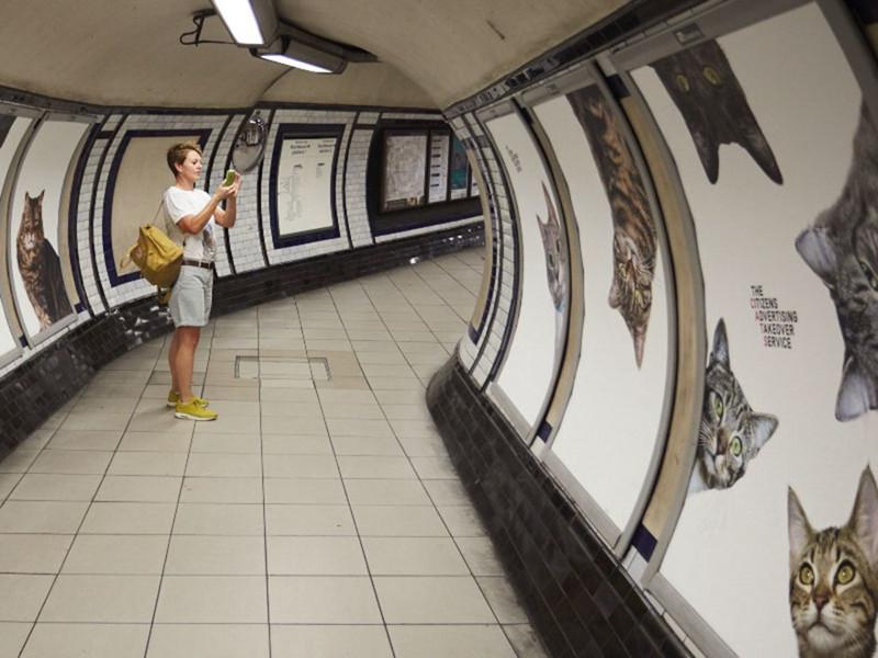 Жители Лондона выкупили все рекламные объявления на станции метро и заменили их на котиков рис 4