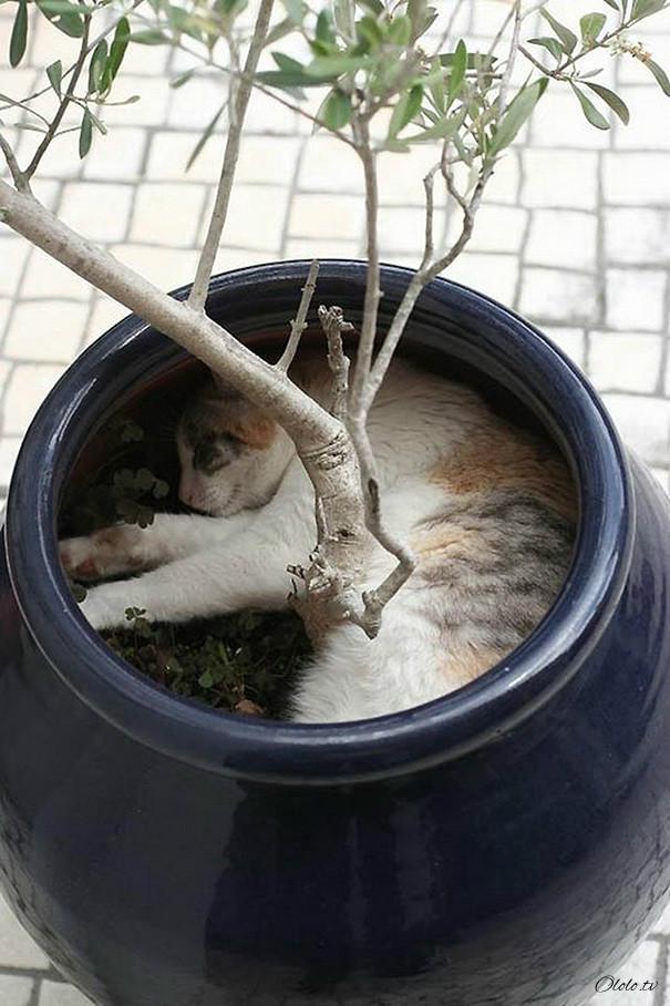 38 забавных доказательств того, что кошки могут уснуть где угодно рис 32