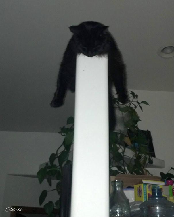 38 забавных доказательств того, что кошки могут уснуть где угодно рис 21