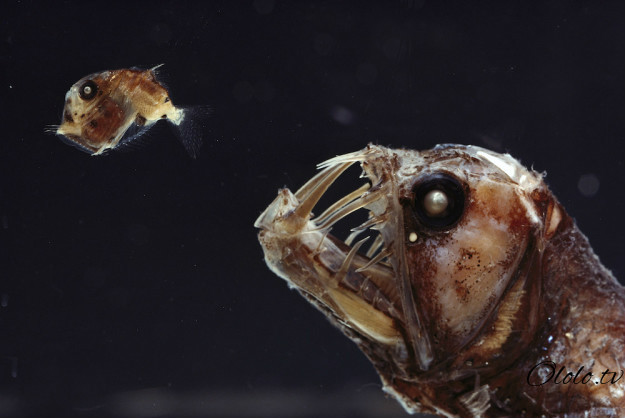 Кто проживает на дне океана? После этого поста у вас появится много вопросов к морским глубинам! рис 2