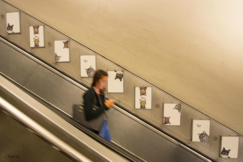 Жители Лондона выкупили все рекламные объявления на станции метро и заменили их на котиков рис 3