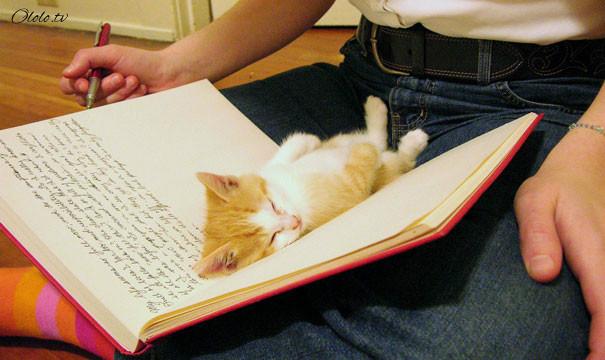 38 забавных доказательств того, что кошки могут уснуть где угодно рис 28