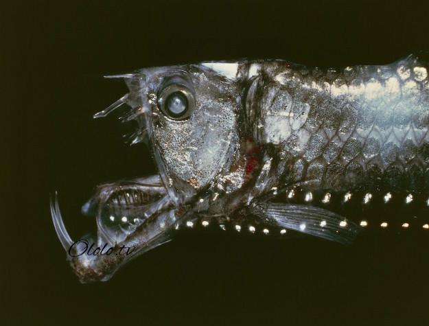 Кто проживает на дне океана? После этого поста у вас появится много вопросов к морским глубинам! рис 4