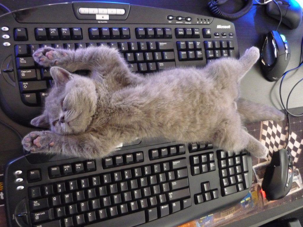 Шабил в бункере картинка с котом этом