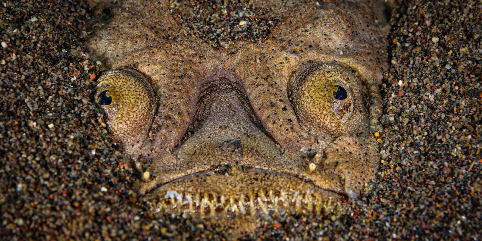 Кто проживает на дне океана? После этого поста у вас появится много вопросов к морским глубинам!
