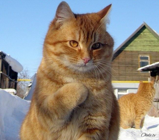 10 фотографий котов, сделанных в самый нужный момент рис 10