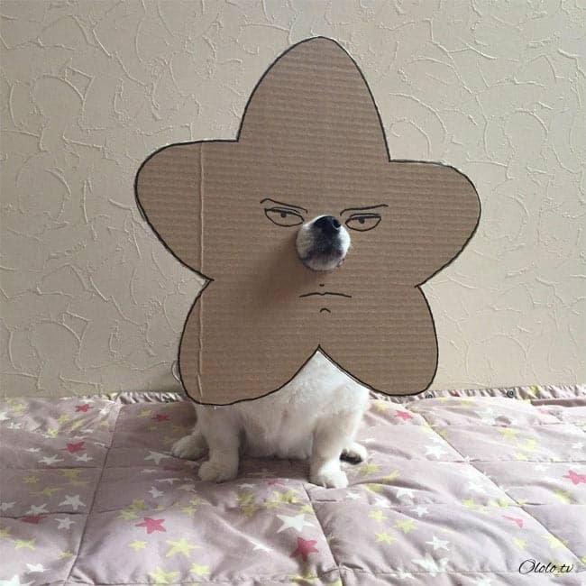 Девушка делает уморительные костюмы из картона для своей собаки рис 14