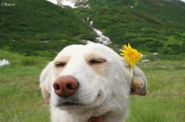18 доказательств, что животные умеют радоваться жизни даже лучше нас рис 16