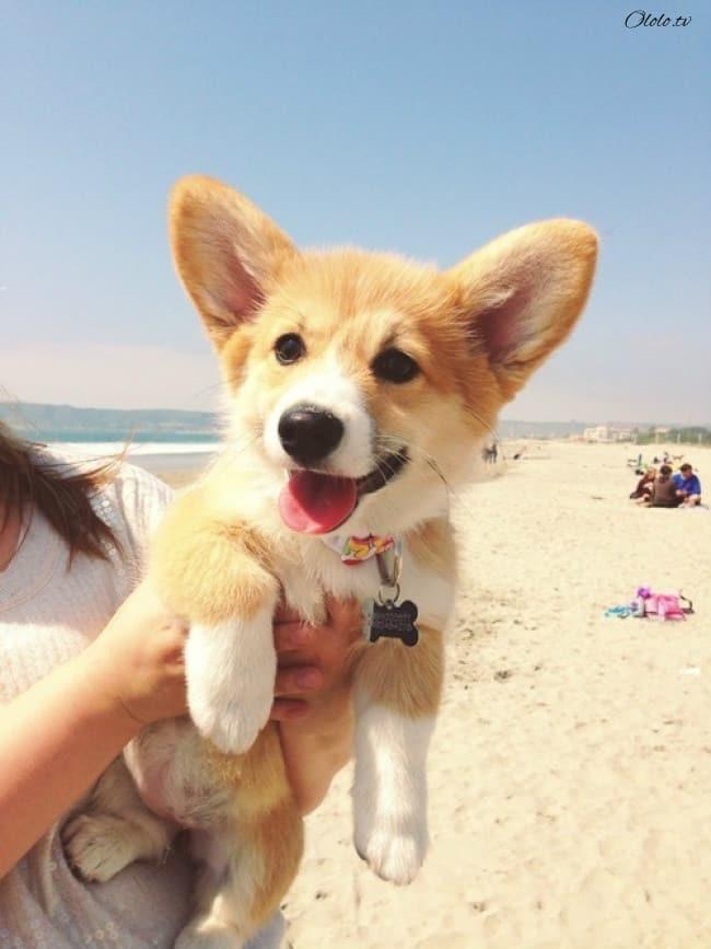 18 доказательств, что животные умеют радоваться жизни даже лучше нас рис 8