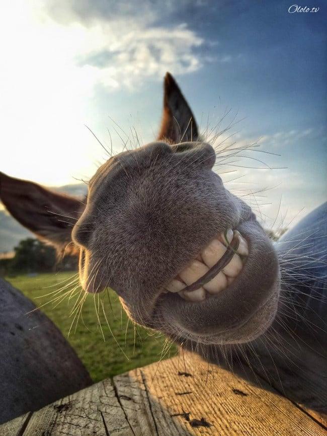 18 доказательств, что животные умеют радоваться жизни даже лучше нас рис 2