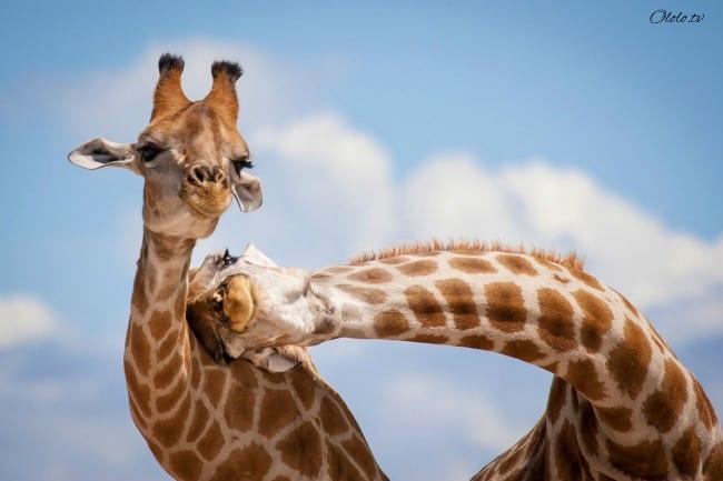 18 доказательств, что животные умеют радоваться жизни даже лучше нас рис 6