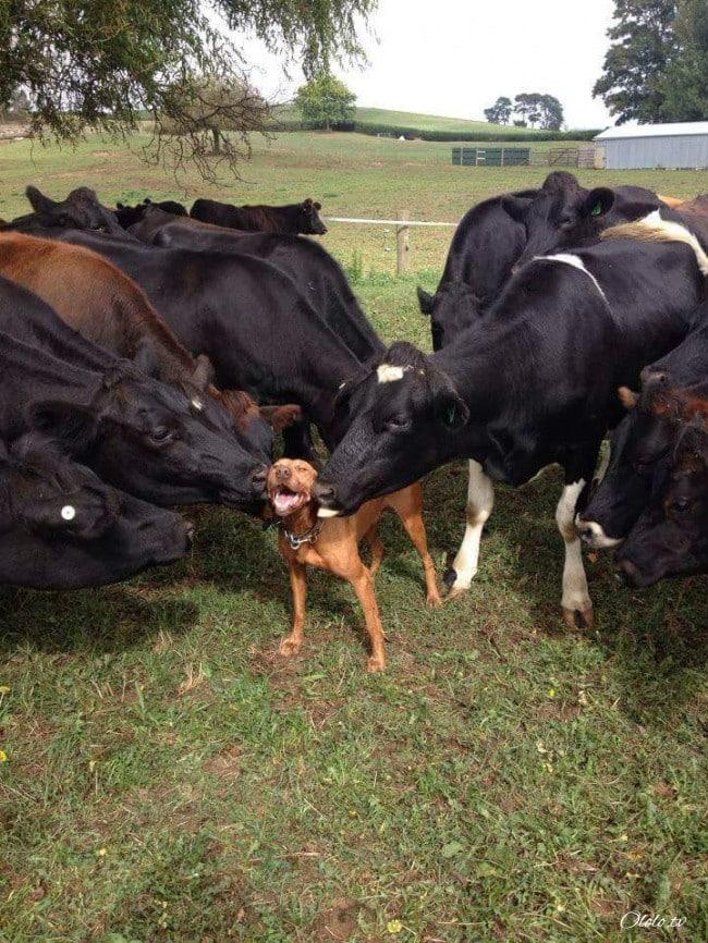 18 доказательств, что животные умеют радоваться жизни даже лучше нас рис 4