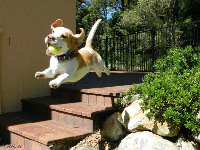 18 доказательств, что животные умеют радоваться жизни даже лучше нас