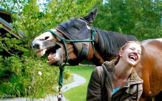 18 доказательств, что животные умеют радоваться жизни даже лучше нас рис 5