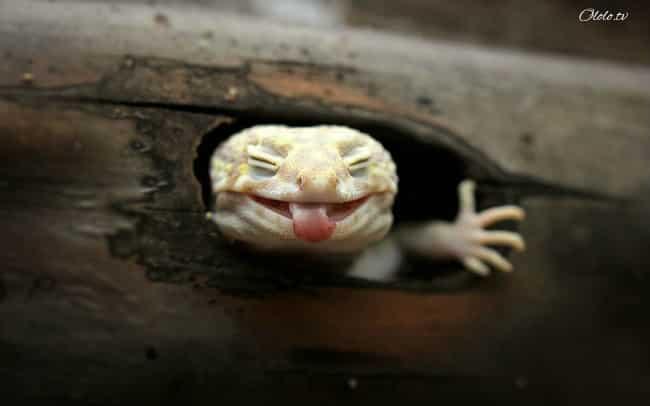 18 доказательств, что животные умеют радоваться жизни даже лучше нас рис 3