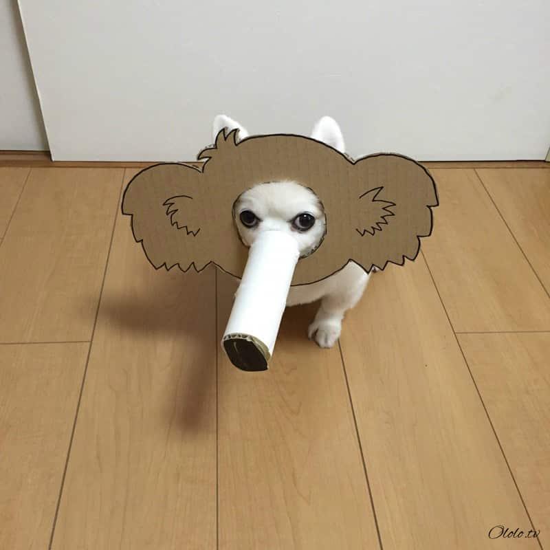 Девушка делает уморительные костюмы из картона для своей собаки рис 16