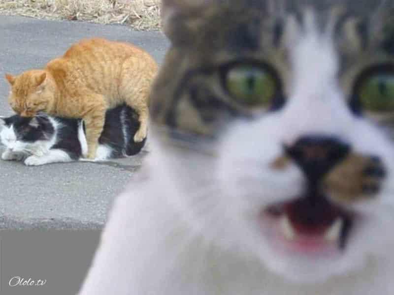 23 фотографии животных, глядя на которые невозможно не улыбнуться рис 17