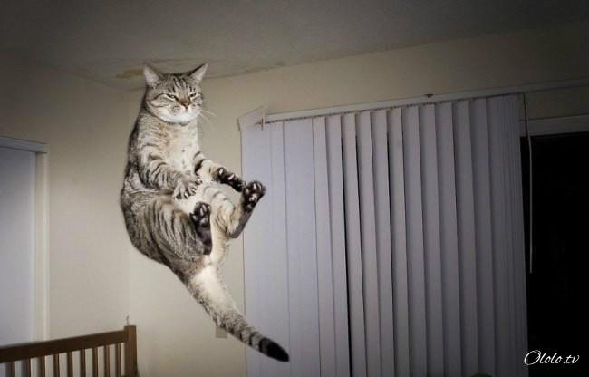 10 фотографий котов, сделанных в самый нужный момент рис 9