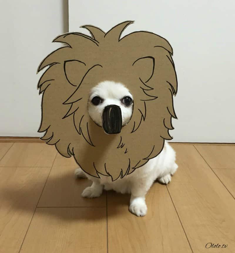 Девушка делает уморительные костюмы из картона для своей собаки рис 13
