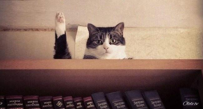 10 фотографий котов, сделанных в самый нужный момент рис 3