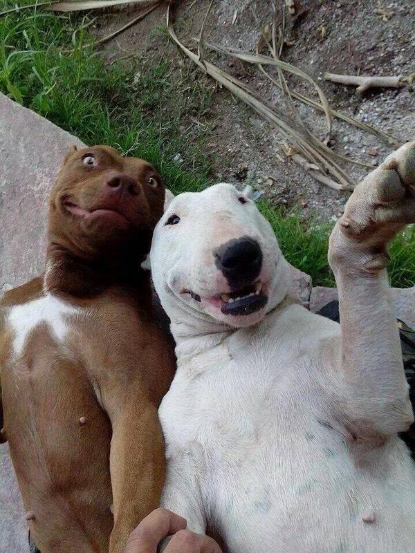 23 фотографии животных, глядя на которые невозможно не улыбнуться рис 19