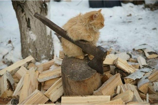 10 фотографий котов, сделанных в самый нужный момент рис 7