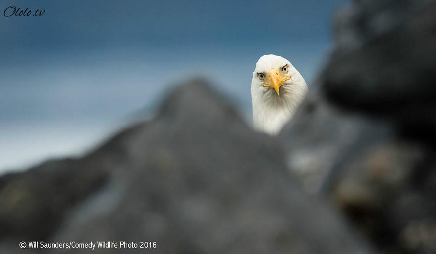 23 самых смешных фотографий с конкурса Comedy Wildlife Photography Awards 2016 рис 17