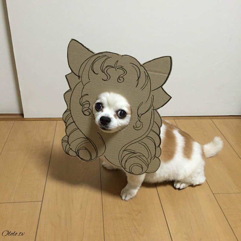 Девушка делает уморительные костюмы из картона для своей собаки рис 11