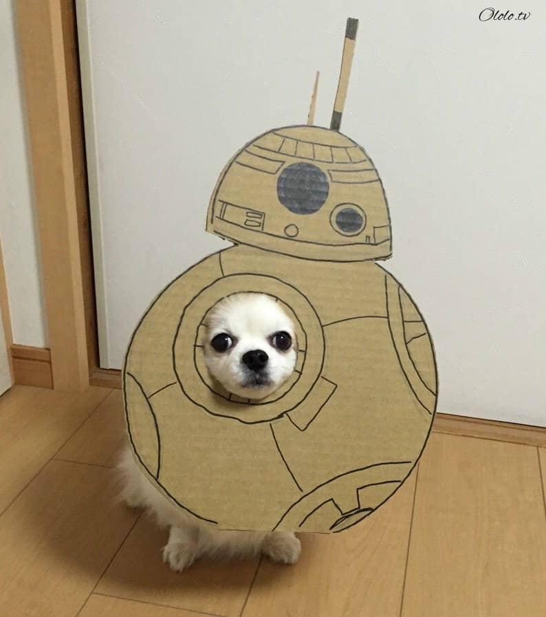 Девушка делает уморительные костюмы из картона для своей собаки рис 10