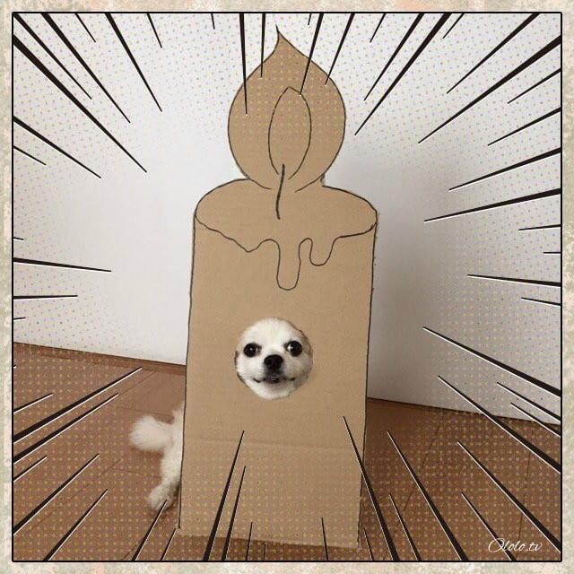 Девушка делает уморительные костюмы из картона для своей собаки рис 9