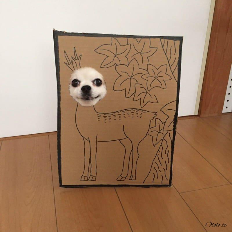 Девушка делает уморительные костюмы из картона для своей собаки рис 7