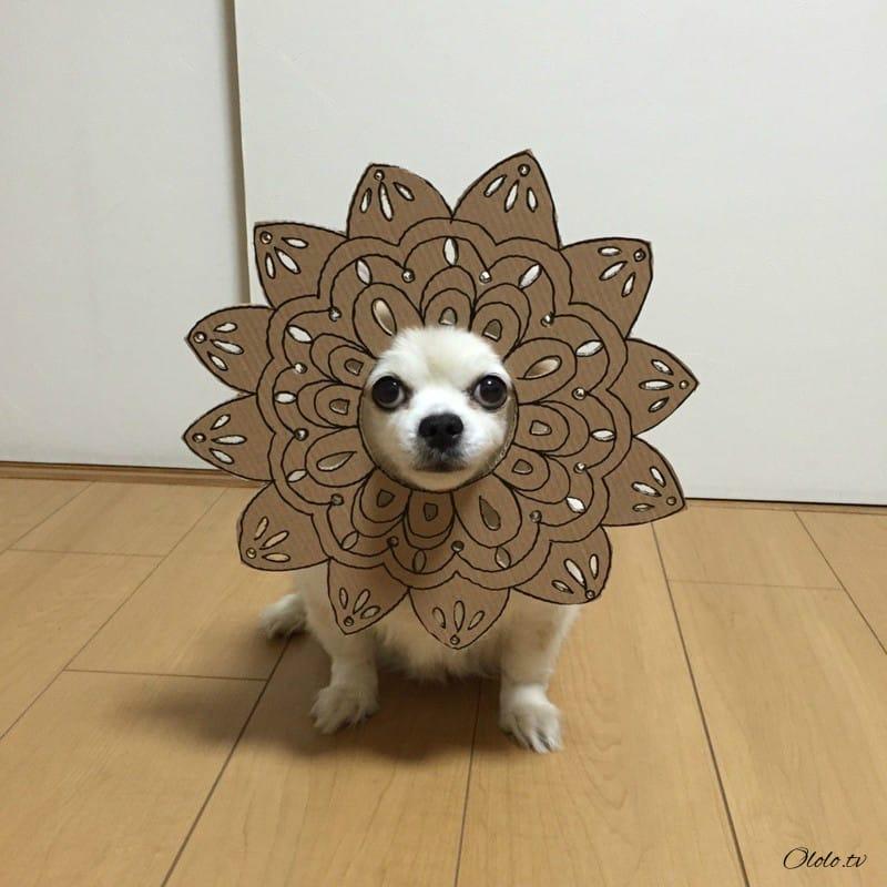 Девушка делает уморительные костюмы из картона для своей собаки рис 6