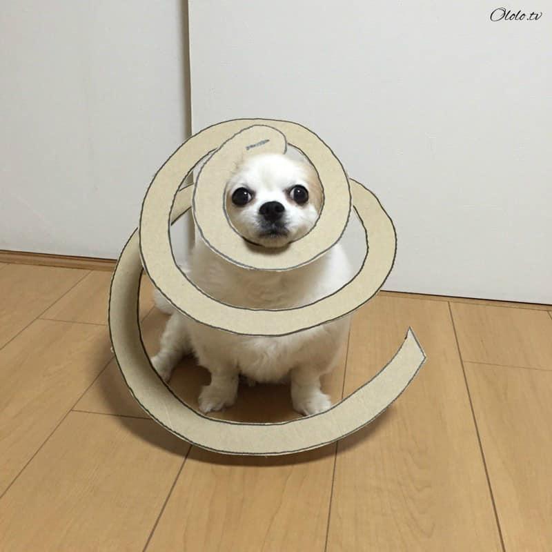 Девушка делает уморительные костюмы из картона для своей собаки рис 4