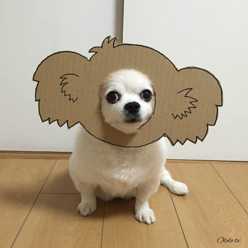 Девушка делает уморительные костюмы из картона для своей собаки рис 3