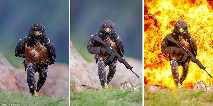 Стервятник попал в битву любителей фотошопа (19 фото)