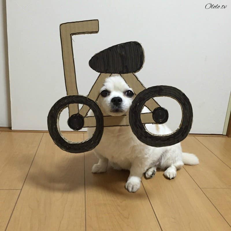 Девушка делает уморительные костюмы из картона для своей собаки рис 2