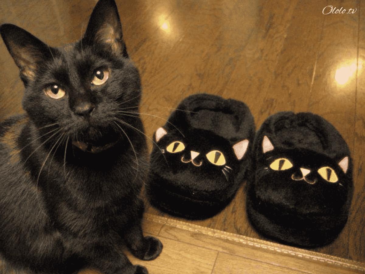23 фотографии животных, глядя на которые невозможно не улыбнуться рис 5