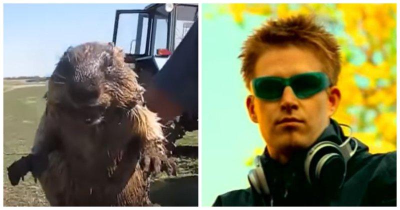 Легендарный трек и мем Darude - Sandstorm в исполнении животных!