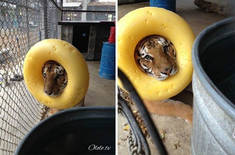 23 фотографии животных, глядя на которые невозможно не улыбнуться рис 3