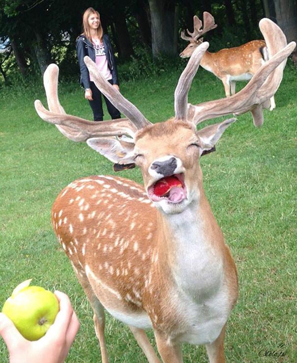 Улыбочку: если б животные могли говорить, они попросили бы вас удалить эти адские фото рис 8