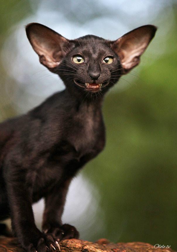 Улыбочку: если б животные могли говорить, они попросили бы вас удалить эти адские фото рис 12