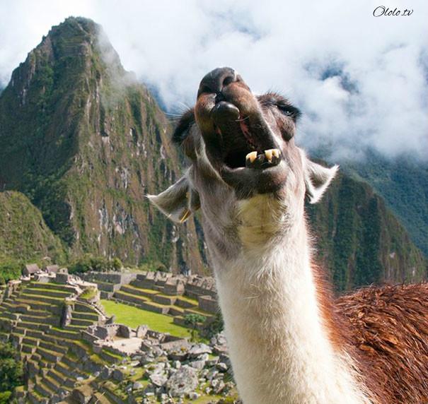 Улыбочку: если б животные могли говорить, они попросили бы вас удалить эти адские фото рис 21