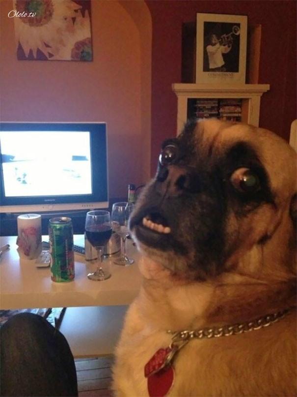 Улыбочку: если б животные могли говорить, они попросили бы вас удалить эти адские фото рис 16