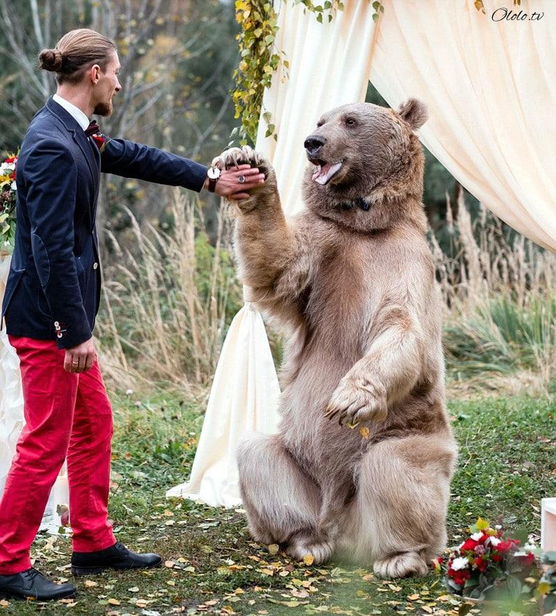 Свадьба по-русски: медведь благословляет жениха и невесту рис 8