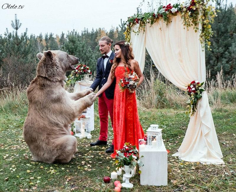 Свадьба по-русски: медведь благословляет жениха и невесту рис 3