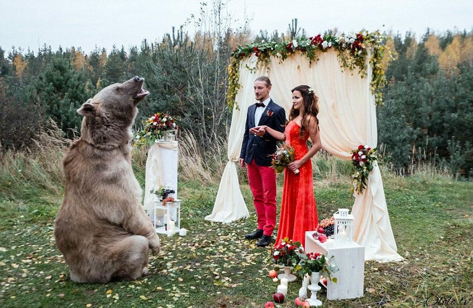 Свадьба по-русски: медведь благословляет жениха и невесту рис 10