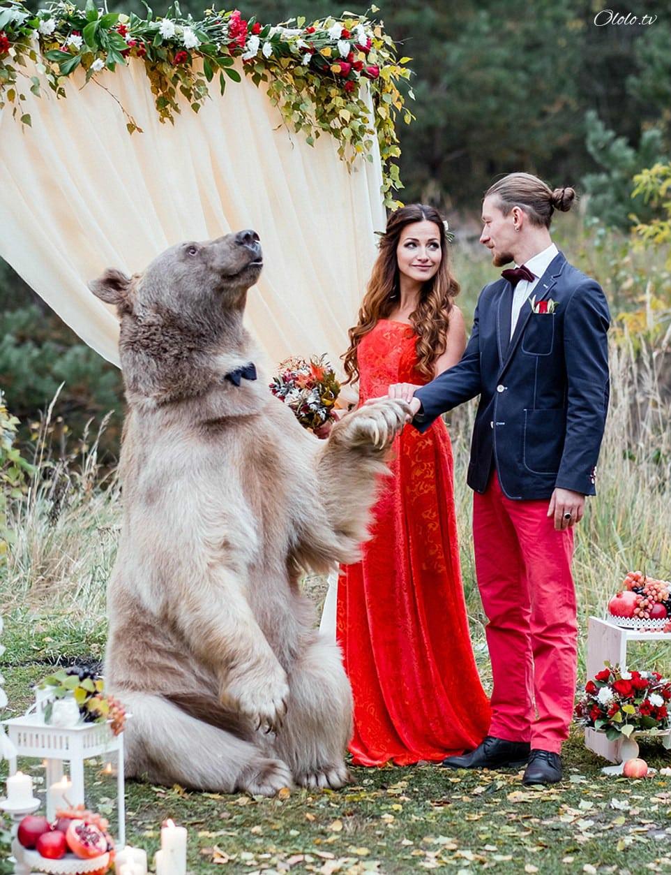Свадьба по-русски: медведь благословляет жениха и невесту рис 11
