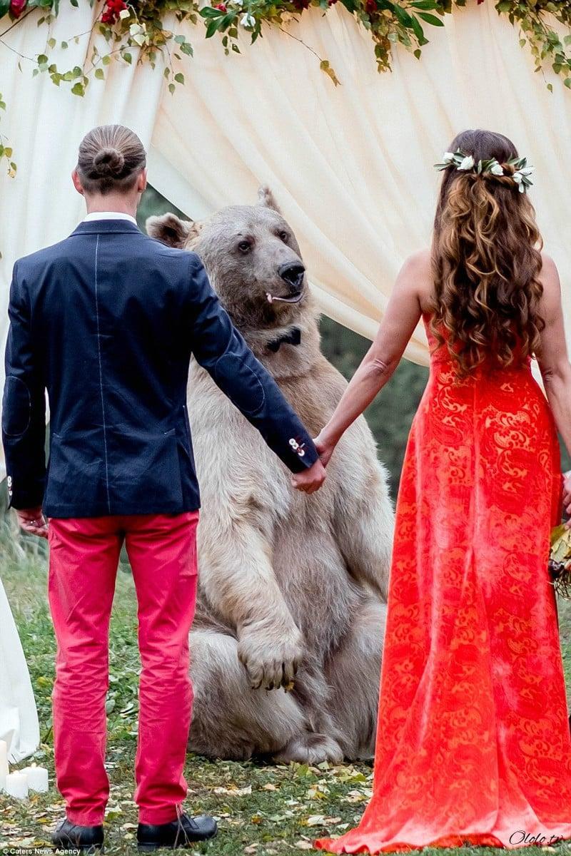 Свадьба по-русски: медведь благословляет жениха и невесту рис 5