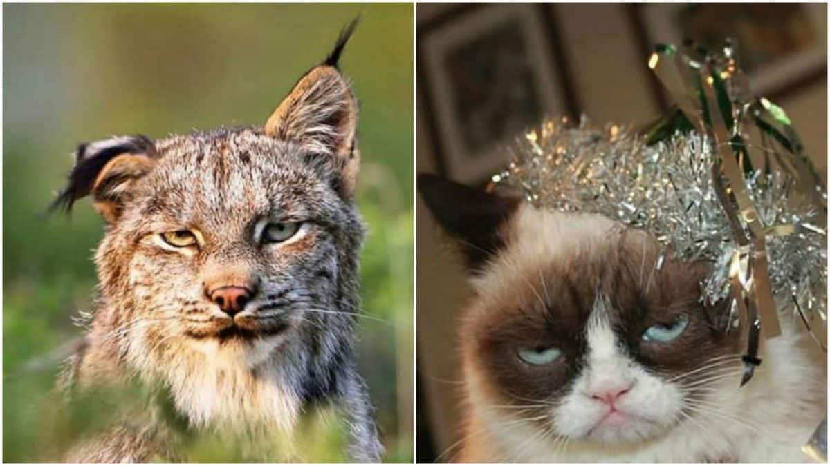 Фотографии животных, которые напоминают людей после бурных вечеринок