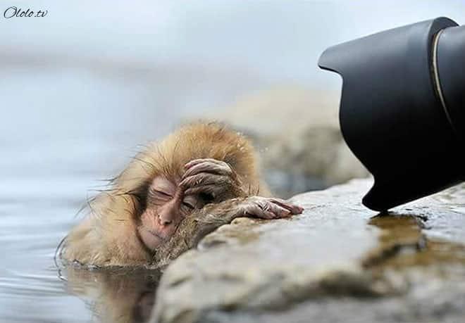 Фотографии животных, которые напоминают людей после бурных вечеринок рис 15